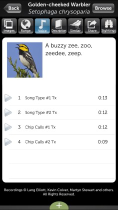 Audubon Birds Pro (iOS) bird song screen for Golden-cheeked warbler